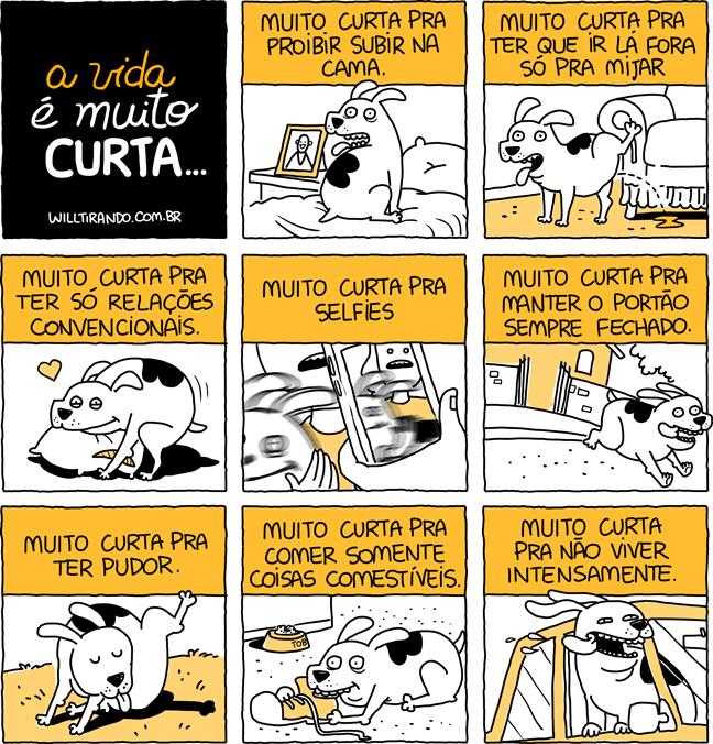 cão cachorro viva intensamente vida curta livro